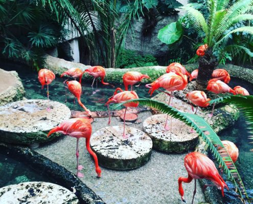 flamingos dallas world aquarium